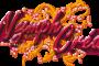 Refonte site internet Prestashop de ventes en ligne NYMPHCREA
