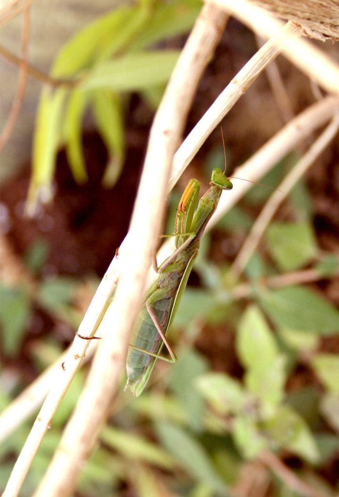photographie macro nature et insecte, retouche photoshop